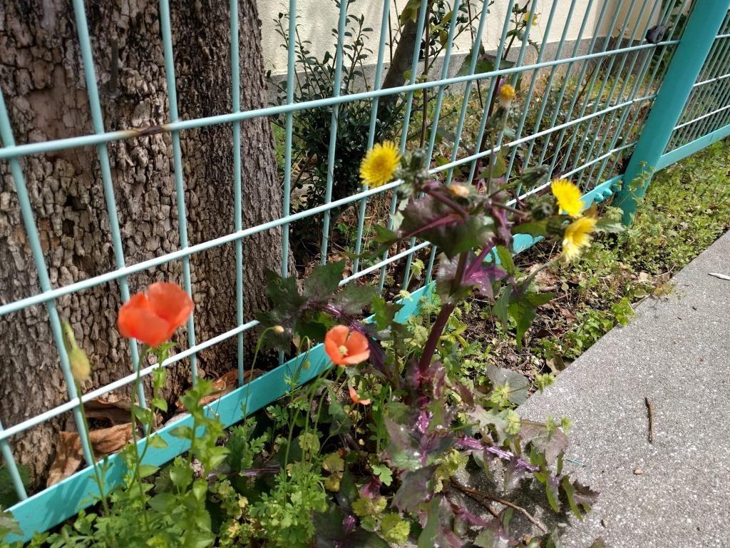 街中の花  flowers in town